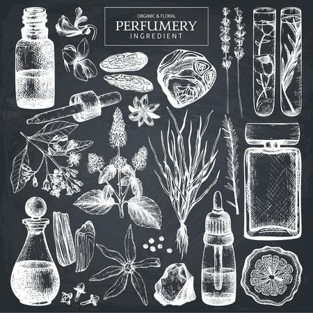 Collection vectorielle de croquis d'ingrédients de parfums et cosmétiques. Ensemble vintage d'illustrations d'herbes et de plantes dessinées à la main. Matières aromatiques pour la parfumerie. Vecteurs