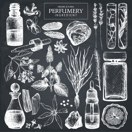 Vector collection of perfumes and cosmetics ingredients sketch. Vintage set of hand drawn herbs and plants illustrations. Aromatic materials for perfumery. Vector Illustration