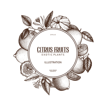 Vintage template. Ink hand drawn design with citrus fruits isolated on white background. Vector illustration of highly detailed citrus fruits sketch Vettoriali