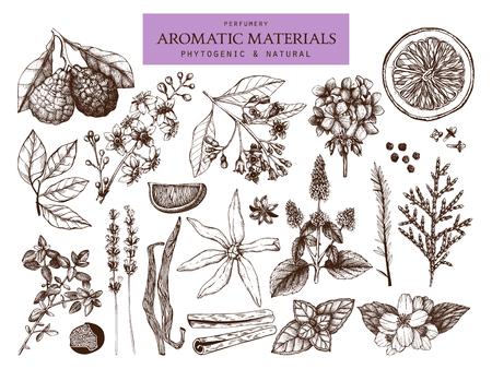 Collection vectorielle de croquis de matériaux de parfumerie et de cosmétiques dessinés à la main. Ensemble vintage de plantes aromatiques pour l'industrie parfumée de haute qualité Vecteurs