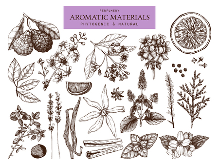 Vector collection of hand drawn perfumery and cosmetics materials sketch. Vintage set of aromatic plants for high-quality scented industry