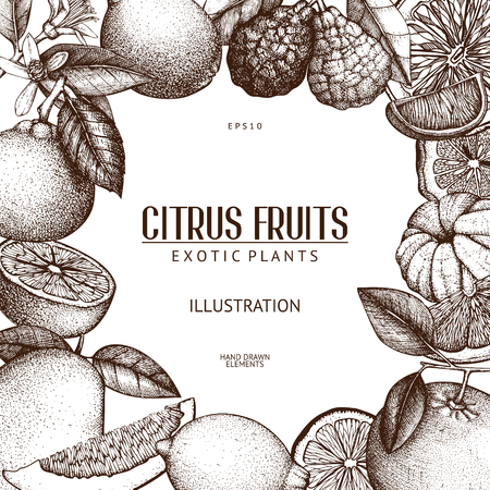 Vintage template. Ink hand drawn design with citrus fruits isolated on white background. Vector illustration of highly detailed citrus fruits sketch