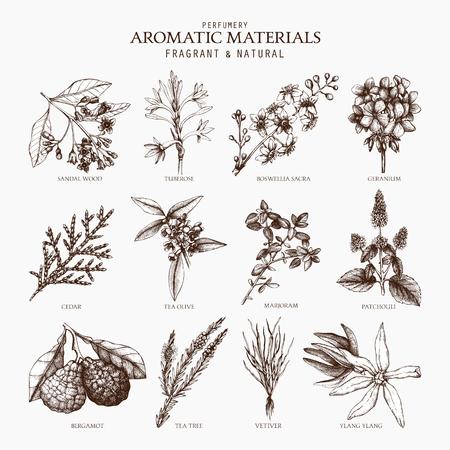 Collection vectorielle d'illustration de plantes aromatiques dessinées à la main. Ensemble de croquis d'ingrédients de parfumerie et de cosmétiques.