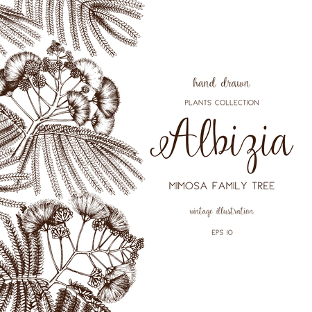 Silk tree in flowers. Vintage card or invitation design with Albizia sketch for wedding decoration. Save the Date. Vector Illustration