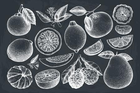 Collezione vintage di frutti disegnati a mano con inchiostro. Disegni vettoriali isolati su sfondo bianco. Illustrazioni di agrumi abbozzati. Contorni di piante esotiche altamente dettagliate.