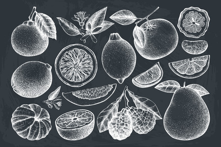 Vintage collection of ink hand drawn fruits. Vector drawings isolated on white background. Sketched citrus illustrations. Highly detailed exotic plants outlines. Ilustração