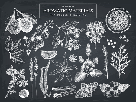 Vector collection of hand drawn perfumery materials and ingredients sketch. Set of aromatic plants