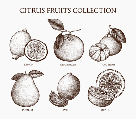 Hand drawn collection of citrus flowers isolated on retro background. Vector illustration of highly detailed citrus fruits sketch