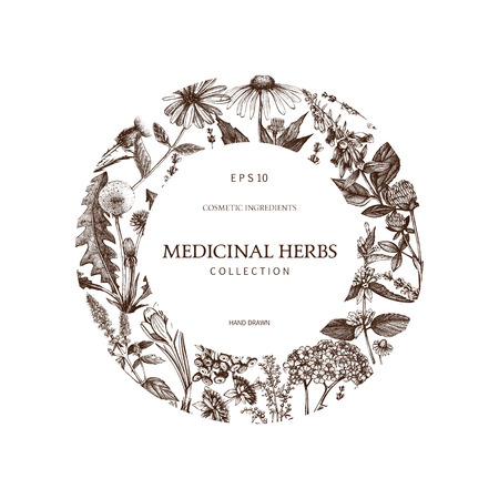 Collection of hand drawn spices and herbs sketch. Botanical flowers illustration. Vintage medicinal plants design. Vector template.