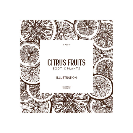 Vintage template. Ink hand drawn design with citrus fruits isolated on white. Citrus fruits sketch Illustration