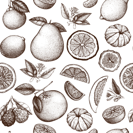 Citrus fruit, flowers, slice and leaves sketch. Vintage exotic plants background isolated on white Illustration