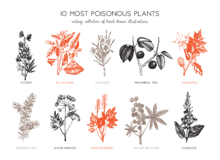 Botanical hand drawn illustration. Vintage noxious plants sketch set isolated on white.