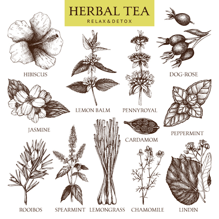 Herbal tea ingredients. Decorative vintage set of herbs and spice sketch isolated on white Vector Illustratie