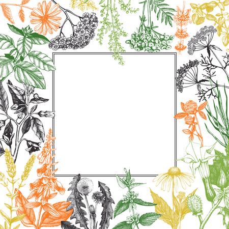 Vectorkaartontwerp met hand getrokken kruiden en onkruidillustratie. Decoratieve inkt achtergrond met vintage planten schets. Geschetste bloemensjabloon