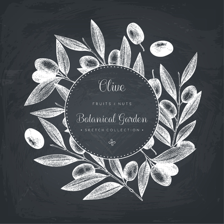 Olive branch illustration on chalkboard. Vintage card design with hand drawn olive tree. Vector template.