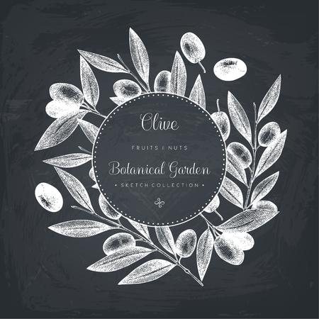 Olive branch illustration on chalkboard. Vintage card design with hand drawn olive tree. Vector template.