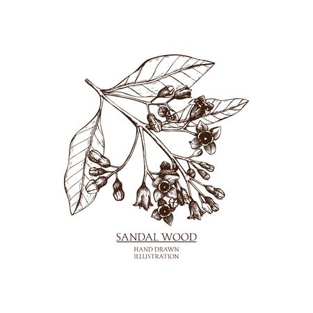 Wektor ręcznie rysowane ilustracja drzewo sandałowe. Szkic materiałów Vintage perfumery i kosmetyki.