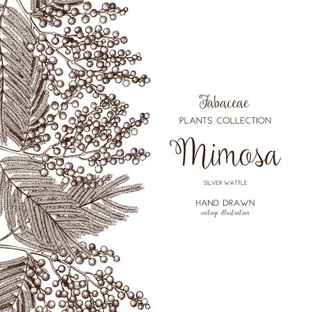 Vektorkarte oder Einladungsdesign mit handgezeichneten Mimosenblumen. Vintage-Rahmen mit silberner Flechtwerkskizze auf weißem Hintergrund. Vorlage für Blumenhochzeit oder Frauentag. Der 8. März