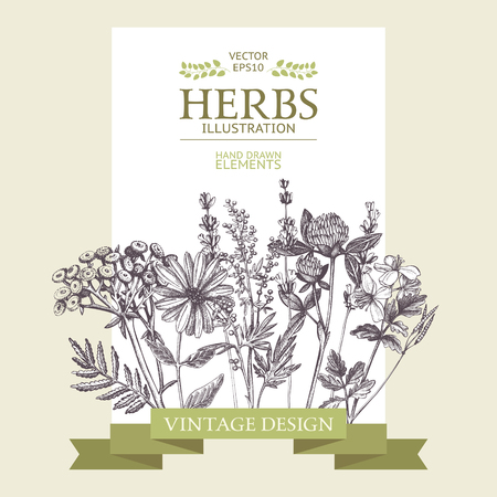 Vector design with hand drawn herbs. Decorative background with vintage medicinal herbs sketch Ilustracje wektorowe