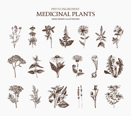 Spices and Herbs. Botanical illustration. Vintage Medicinal and Poisonous Plants sketch set isolated on white