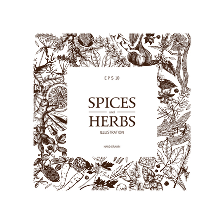 Vintage template. Ink hand drawn design with spice and herbs. Vector illustration with highly detailed aromatic plants sketch isolated on white. Vektoros illusztráció