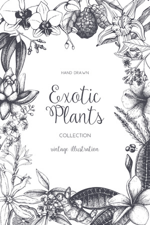 Exotic background with hand drawn plants sketch. Vector tropical flowers, leaves and fruits design. Vintage template with botanical elements on white. Vettoriali
