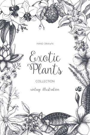 Exotischer Hintergrund mit handgezeichneter Pflanzenskizze. Vektor tropische Blumen, Blätter und Früchte Design. Vintage-Vorlage mit botanischen Elementen auf Weiß. Vektorgrafik