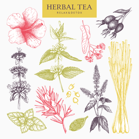 Herbal tea ingredients. Decorative pastel set of vintage herbs and spice sketch. Vector illustration