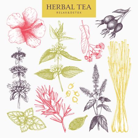 Ingredientes de té de hierbas. Pastel decorativo conjunto de hierbas vintage y bosquejo de especias. Ilustración vectorial