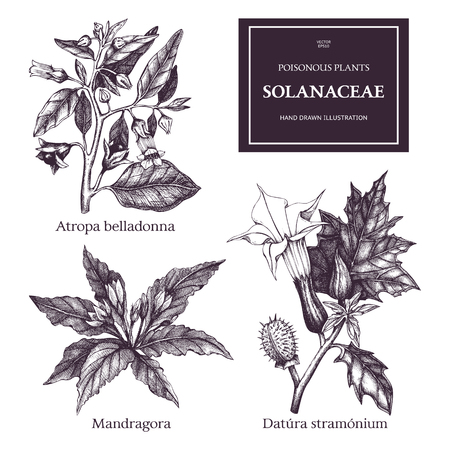 Vector collection of hand drawn nightshade family plants illustration