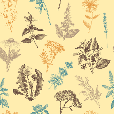 Seamless pattern with hand drawn herbs and spice collection. Vector background with Botanical sketch. Vintage Medicinal and Poisonous Plants illustration. Illustration