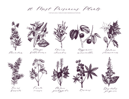 10 most poisonous plants collection. Botanical hand drawn illustration. Vintage noxious plants sketch set isolated on white.