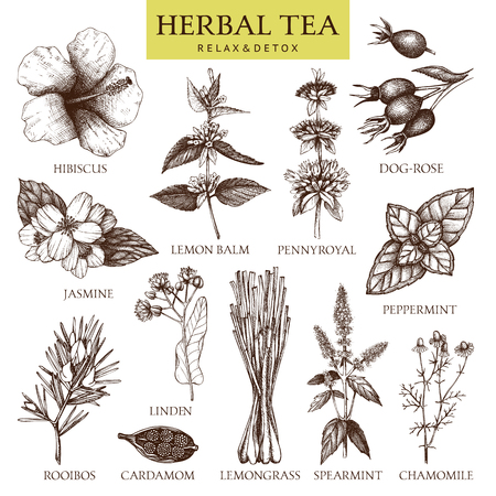 Herbal tea ingredients. Decorative vintage set of herbs and spice sketch isolated on white