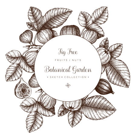 Vector design with hand drawn figs sketch. Vinatge frame with botanical elements. Fig fruit branch. Retro template. Summer decor elements.