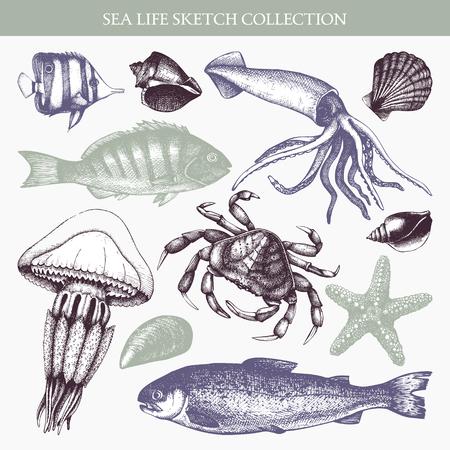 Vector Sea life illustration set. Hand drawn Mussels, fish, crab, starfish, squid, jellyfish, shellfish sketch. Isolated on white.