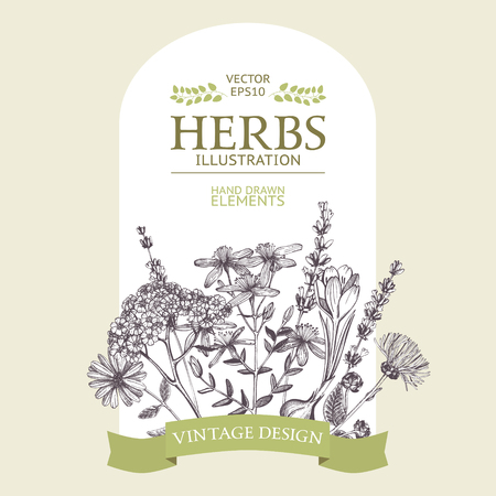 Vector design with hand drawn herbs. Decorative background with vintage medicinal herbs sketch Vecteurs