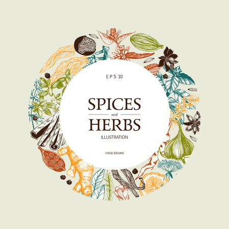 Vector card design with hand drawn spices and herbs. Decorative colorful background with vintage aromatic plants sketch.