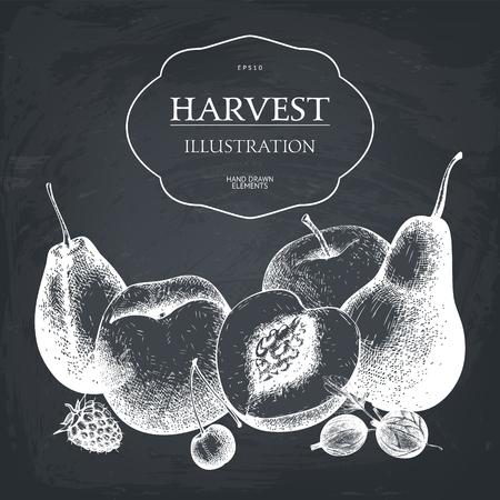 Hand Drawn Vintage fruit illustration for vegetarian food.