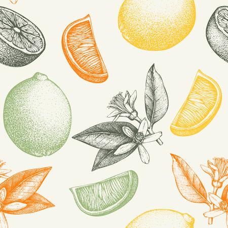 Fruit, flowers, slice and leaves sketch. Vintage citrus background in pastel colors