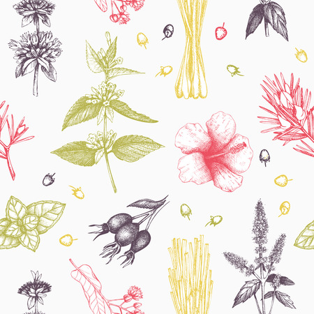 Botanical design with hand drawn herbal tea ingredients. Decorative pastel background with vintage herbs and spice sketch. Herbal seamless pattern isolated on white. Vector illustration
