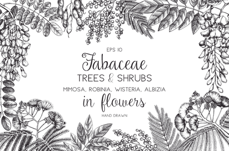 Vintage trees and flowers Valentines Day or Wedding Design Template on chalkboard. Vector greeting card with black locust, silver wattle, albizia sketch. Illustration