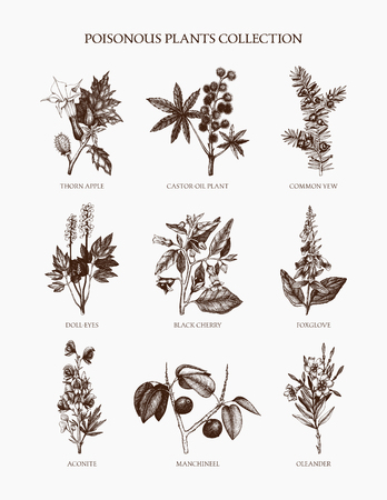 9 most poisonous plants collection. Botanical hand drawn flowers illustration. Vintage noxious herbs and weeds sketch set. Vector outlines Illustration