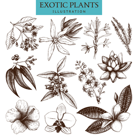 Vector collection of hand drawn Exotic plants sketch. Natural design elements. Tropical flowers, leaves and tree illustration isolated on white.