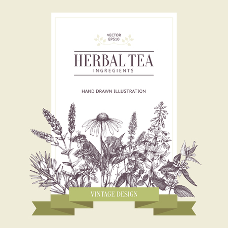 Botanical design with hand drawn herbal tea ingredients. Decorative colorful background with vintage herbs and spice sketch. Vector template