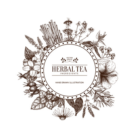 Vintage card design with herbal tea sketch collection. Vector template with hand drawn herbs illustration isolated on white background
