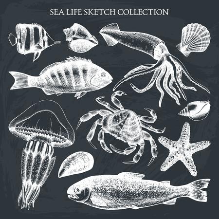 Vector Sea life illustration set. Hand drawn Mussels, fish, crab, starfish, squid, jellyfish, shellfish sketch. Isolated on chalk. Illustration