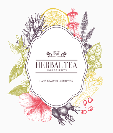 Vintage card design with herbal tea sketch collection. Fruits and vegetables Ilustração