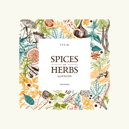 Vintage template. Ink hand drawn design with spice and herbs. Vector illustration with highly detailed aromatic plants sketch in pastel colors.  イラスト・ベクター素材