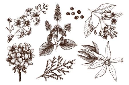 Collezione vettoriale di schizzo di materiali di profumeria e cosmetici disegnati a mano. Set vintage di piante aromatiche per l'industria profumata di alta qualità Vettoriali