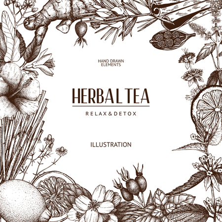 Vector design with hand drawn herbs. Decorative background with herbal tea ingredients sketch